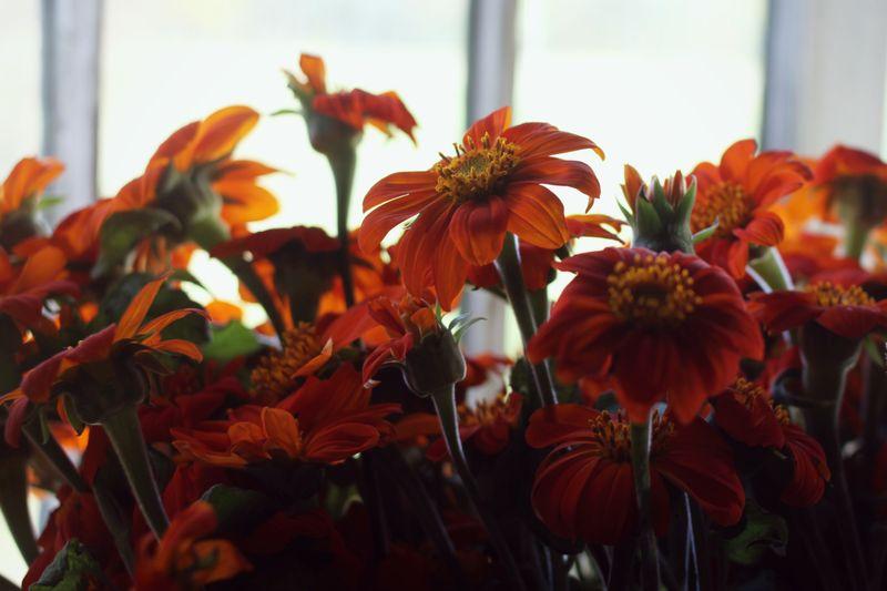 Flowers-last-day-01